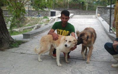 Chaman & Lucky (Nikoo)