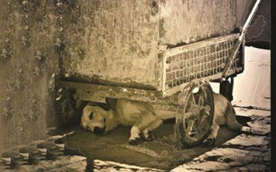 روز جهانی حیوانات بی سرپناه-1394