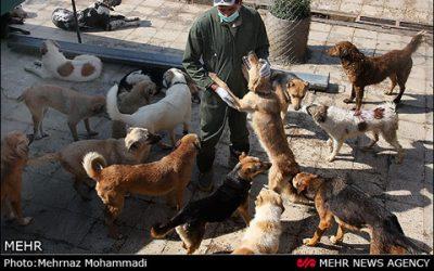 گزارش تصویری خبرگزاری مهر از پناهگاه وفا
