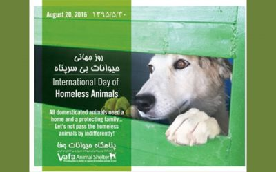 International Homeless Animals' Day-2016