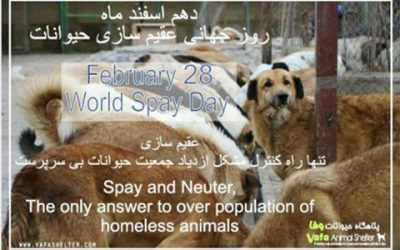 World Spay Day-2017
