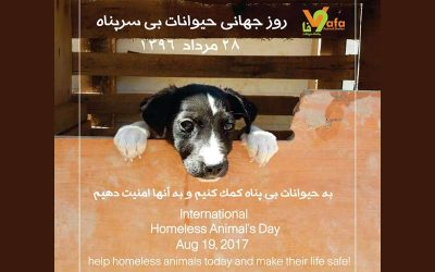 International Homeless Animals' Day 2017