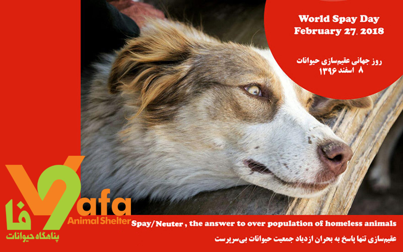 World Spay Day- 2018