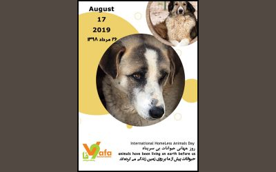 International Homeless Animals' Day -2019