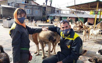 با مدیران پناهگاه حیوانات وفا در هشتگرد آشنا شوید!