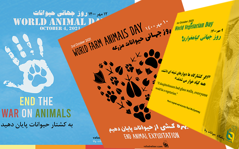 A week about animal rights