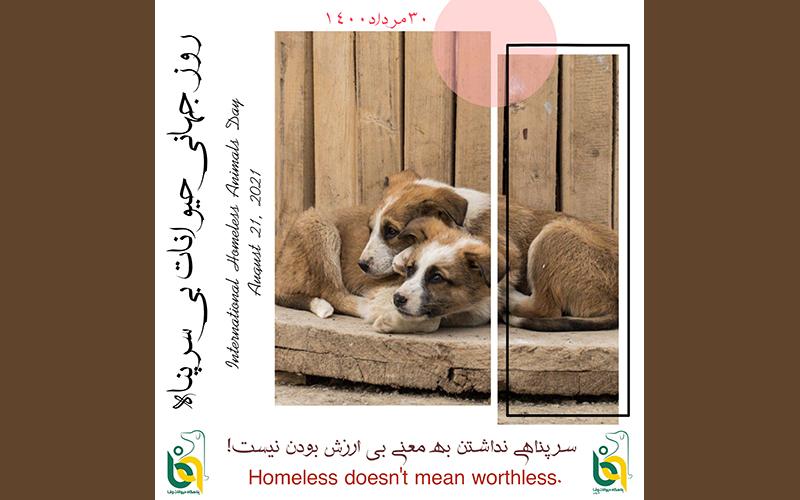The International Homeless Animals Day – Aug 21 2021